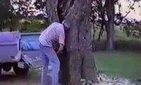 Idealne ścięcie drzewa
