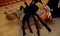 Halloween - Oczekiwania kontra Rzeczywistość