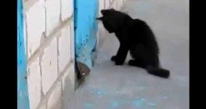 Kot pomaga psu