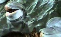 Przyjaźń kota i delfina