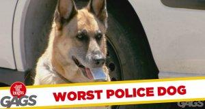 Ukryta kamera - najgorszy pies policyjny