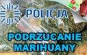 Podrzucanie marihuany