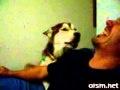 Pies, który mówi I love you