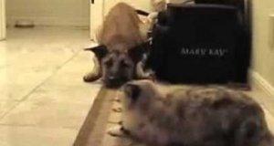 Nie przejdziesz, psie