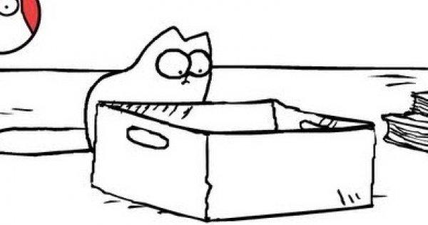 Kot Simona - pudełko