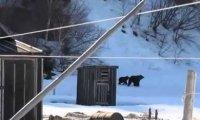 Niedźwiedzie uciekają przed babcią