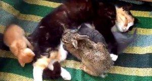 Kot adoptował zajączka