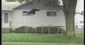 Misio vs trampolina
