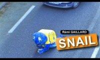 Ślimak na drodze