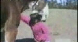 Mściwy koń gryzie dziewczynkę
