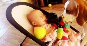 Pies próbuje przeprosić po kradzieży zabawki