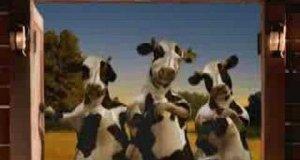 Krowy i kurczaki