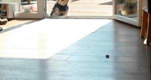 Pies myśli, że drzwi są zamknięte