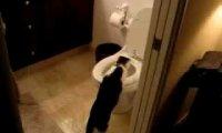 Kot czyścioszek