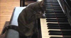 Grający kot