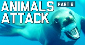 Kompilacja reakcji na ataki zwierząt - FailArmy