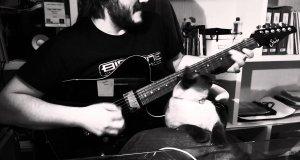 Gitarzysta kontra kot