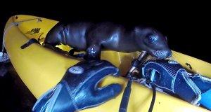 Co możesz zobaczyć w swoim kajaku po nocnym nurkowaniu?