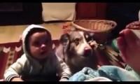 Pies szybciej od dziecka nauczył się mówić