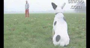 Kopnij psa
