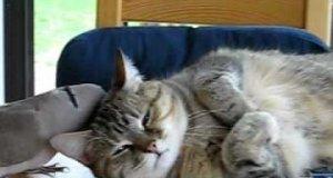 Kot o stalowych nerwach