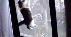 Kot - pająk 2