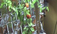 Egzotyczne owoce wyhodowane w bloku