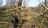 Szympans eliminuje drona
