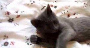 Kot - Śpioszek