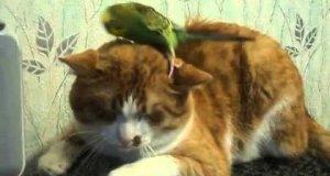Najbardziej cierpliwy kot na świecie