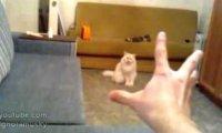Nawet kot nie oprze się sile telepatii