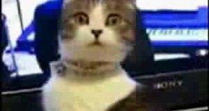 Horror z Kotem