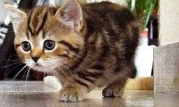 Skradający się kotek - trzyma w napięciu!