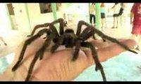 Łagodny pająk