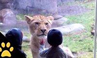 Dzieci odwiedzają Zoo