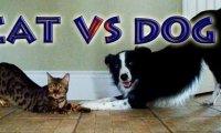 Kot vs Pies - Konkurs sztuczek