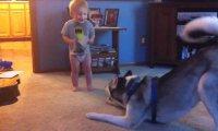 Dyskusja dziecka i psa Husky