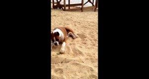 Pies oszalał od smaku limonki