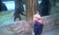 Dziecko i mały goryl
