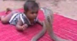 Dziecko vs Kobra - wybór silnego króla