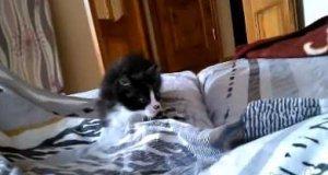 Poranny atak małego kociaka
