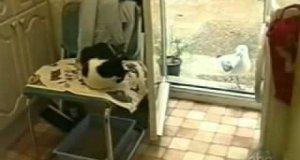 Mewa i kocie żarcie
