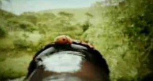 Sprytne owady