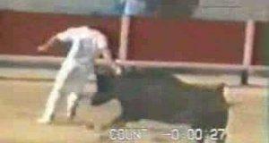 Trafiony przez byka