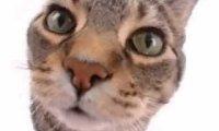 Kitty said what?