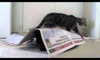 Niespodzianka w gazecie