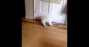Psia agresja