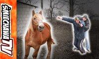 Koń u Szwagra