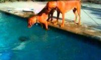 Bardzo zmartwiony pies