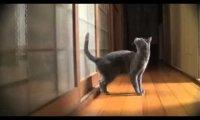 Koty - śmieszne ujęcia